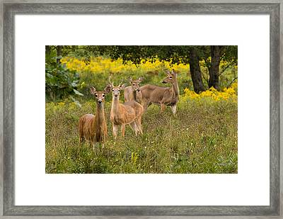 Hangin With The Ladies Framed Print by Thomas Pettengill