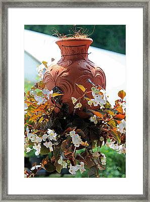 Hanging Begonia Pot In Watercolor Framed Print by Suzanne Gaff