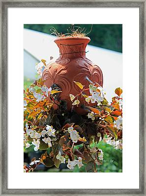 Hanging Begonia Pot Framed Print by Suzanne Gaff