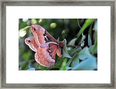 Hanging By A Moment Framed Print by Michelle DiGuardi