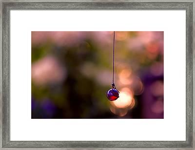 Hanging By A Thread Framed Print by Bonnie Bruno