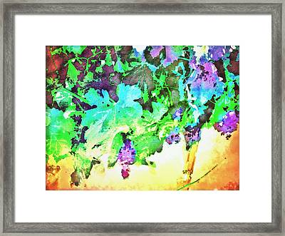 Hanging Grapes Framed Print by Cindy Edwards