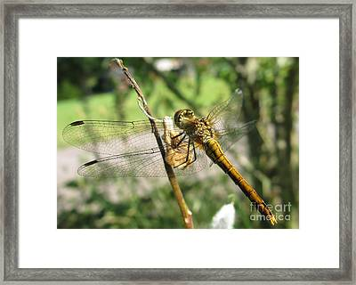 Hanging In There Framed Print by Martin Howard