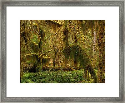 Hanging Moss Framed Print by Leland D Howard