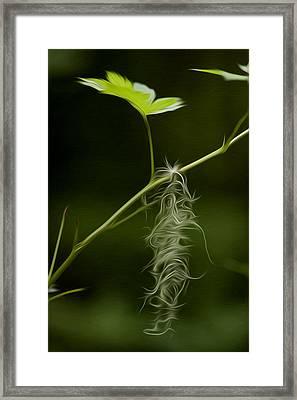 Hanging On Framed Print by David Kehrli