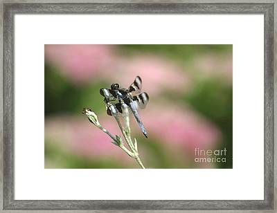 Hanging On Framed Print by Living Color Photography Lorraine Lynch
