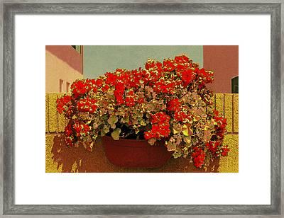 Hanging Pot With Geranium Framed Print by Ben and Raisa Gertsberg