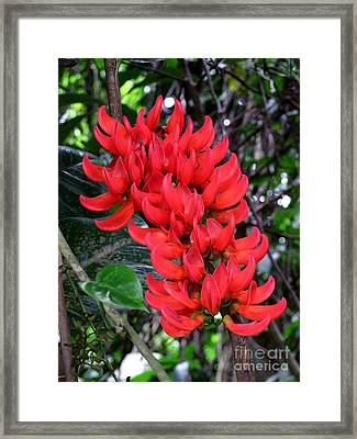 Hanging Red Jade - No 2 Framed Print by Mary Deal