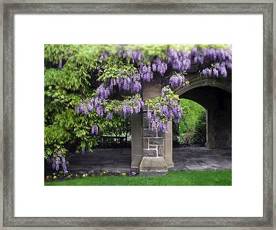 Hanging Wisteria Framed Print by Jessica Jenney