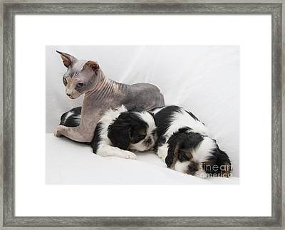 Hanging With The Dogs Framed Print by Jeannette Hunt