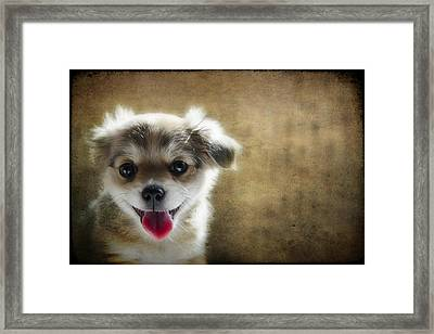 Happiness Is A Little Puppy Framed Print by Lisa Knechtel