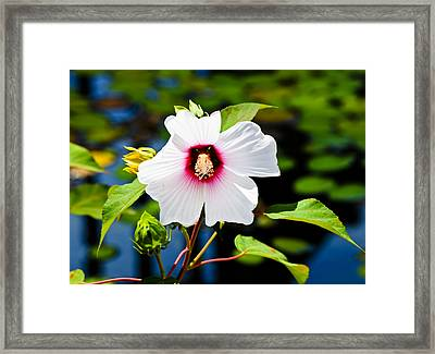 Happiness Shared Is The Flower Framed Print by Christi Kraft