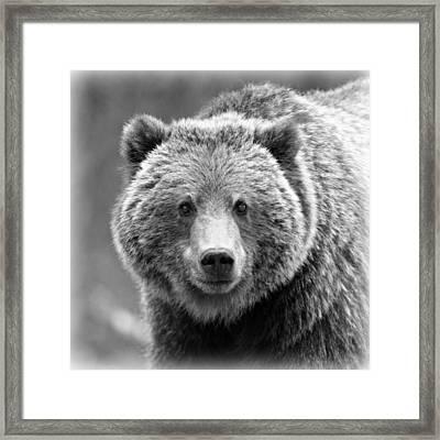 Happy Bear Framed Print by Stephen Stookey