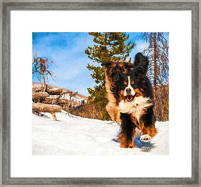 Happy Bernese Mountain Dog And Leonberger Winter  Framed Print by Gary Whitton