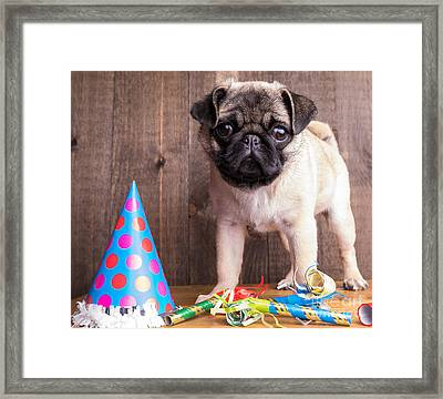 Happy Birthday Cute Pug Puppy Framed Print by Edward Fielding