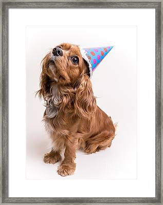 Happy Birthday Dog Framed Print by Edward Fielding