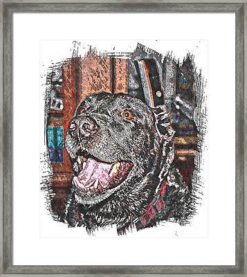 Happy Black Lab  Framed Print by Barbara Griffin