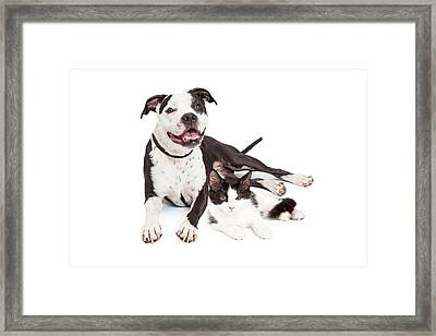 Happy Dog And Kitten Together Framed Print by Susan  Schmitz