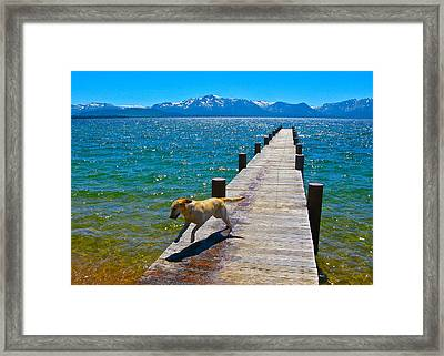 Happy Dog Framed Print by Michael Blesius