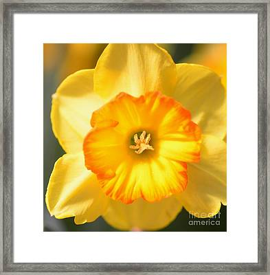 Happy Face Framed Print by Kathleen Struckle