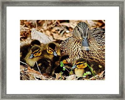 Happy Family Framed Print by Frozen in Time Fine Art Photography