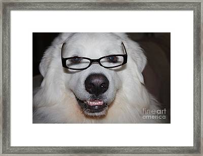 Happy Great Pyrnesse With His New Reading Glasses Framed Print by John Telfer