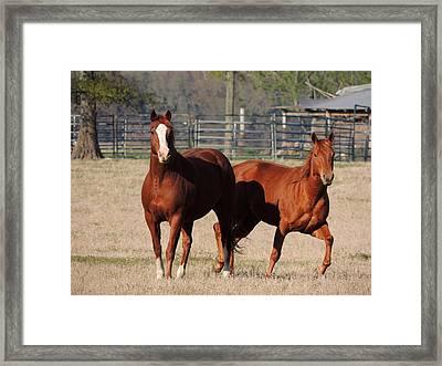 Happy Horses Hoofin-it Framed Print by Kim Pate