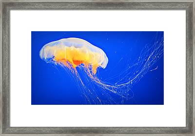 Happy Jelly  Framed Print by Lynsie Petig