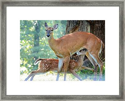 Happy Meal Framed Print by Nava Thompson