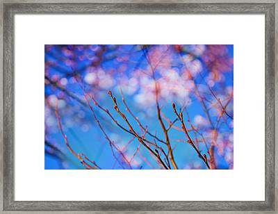 Happy New Year Framed Print by Kunal Mehra