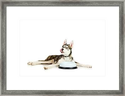 Happy Puppy Framed Print by Alexey Stiop
