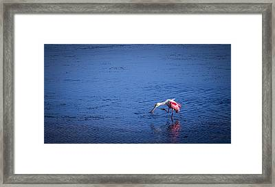 Happy Spoonbill Framed Print by Marvin Spates