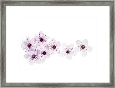 Happy Spring Framed Print by Rebecca Cozart