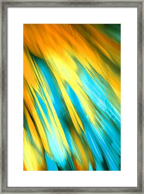 Happy Together Right Side Framed Print by Dazzle Zazz