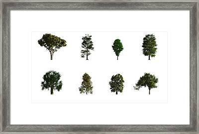 Hardwood Trees Framed Print by Mikkel Juul Jensen