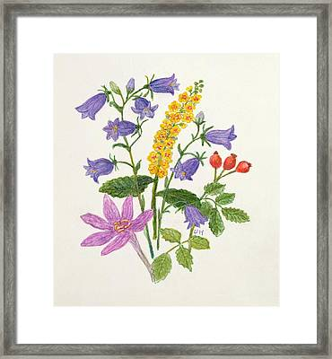 Harebells And Other Wild Flowers  Framed Print by Ursula Hodgson