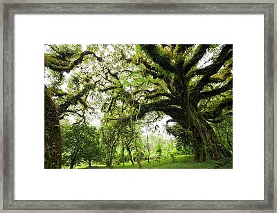 Harenna Forest Framed Print by Photostock-israel