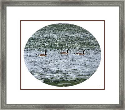 Harmonious Canada Geese Framed Print by Will Borden