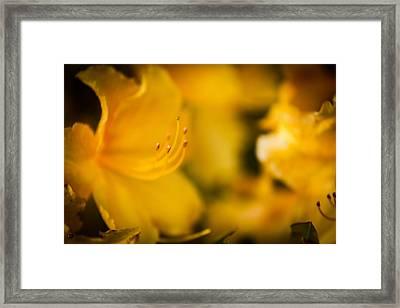 Harmony Framed Print by Matt Dobson
