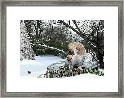 Harry The Squirrel Framed Print by Morag Bates