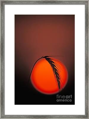 Harvest Sunset - Fs000416 Framed Print by Daniel Dempster