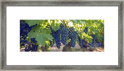 Harvest Time Framed Print by Jon Neidert