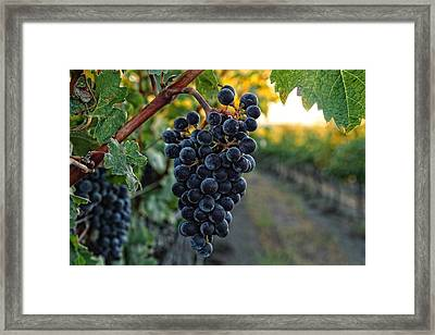 Harvest Time Framed Print by Lynn Hopwood