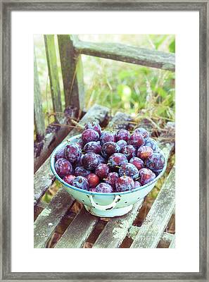 Harvested Plums Framed Print by Tim Gainey