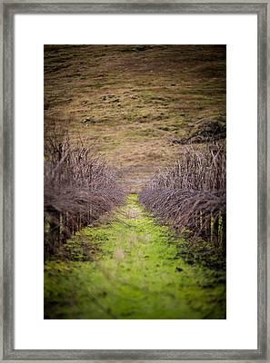 Harvested Vines Framed Print by Mike Lee
