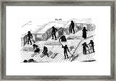 Harvesting Corn Framed Print by Universal History Archive/uig