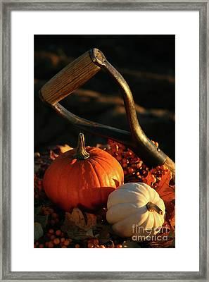 Harvesting For Thanksgiving Framed Print by Sandra Cunningham