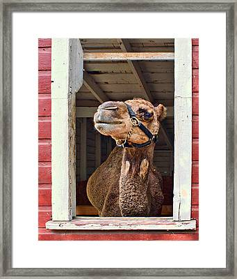 Haughty Framed Print by Nikolyn McDonald