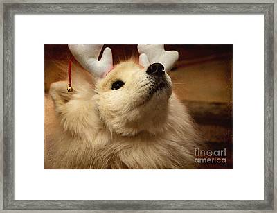 Have I Been A Good Doggie? Framed Print by Lois Bryan