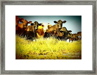Have You Herd Framed Print by Lynda Dawson-Youngclaus